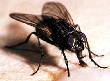 20110607153530-mosca1.jpg